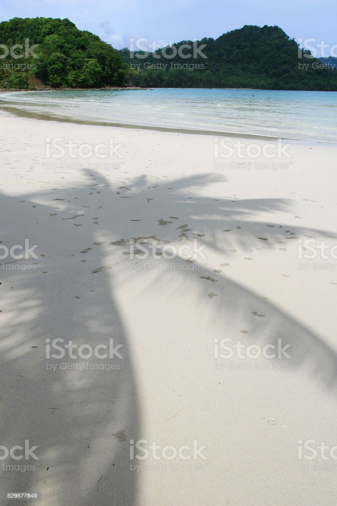 Shadow of the Coconut stock photo