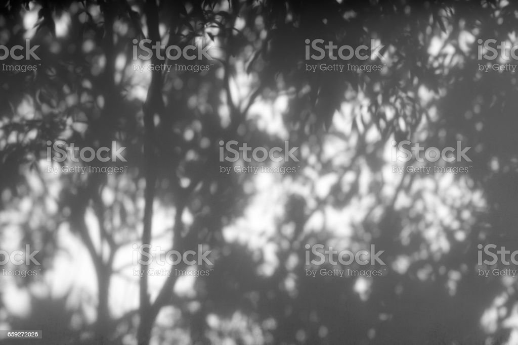 Shadow of tree on a white wall. stock photo