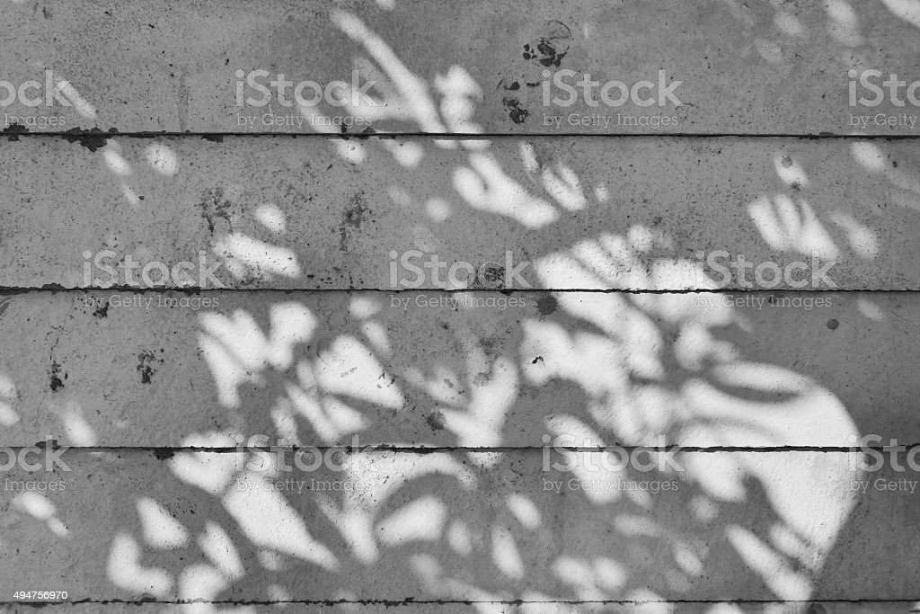 shadow of tree on raw concrete wall stock photo