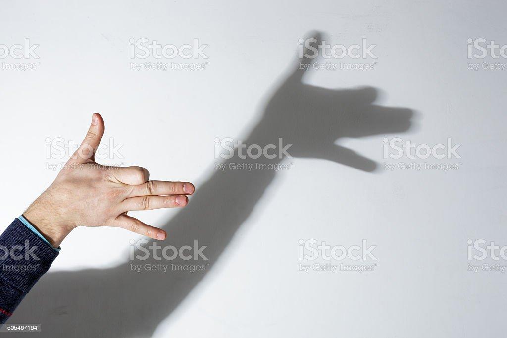 shadow play dog stock photo