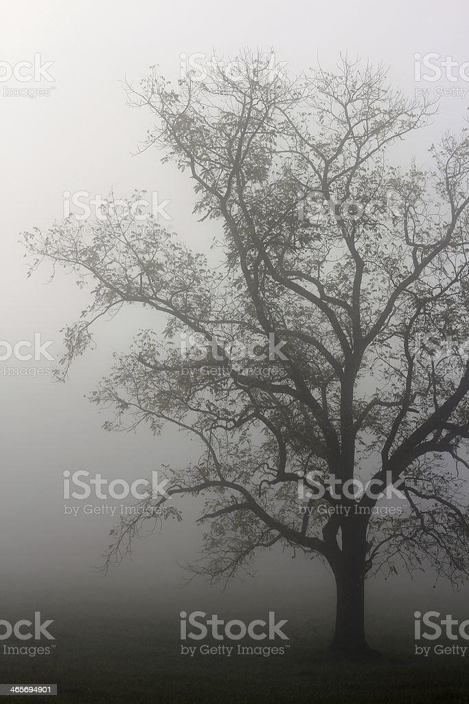 Shadow Tree stock photo