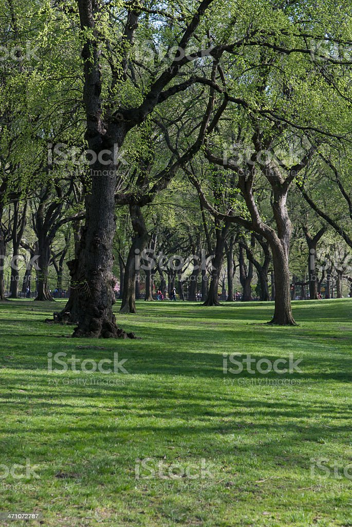 Shadowed Forest royalty-free stock photo