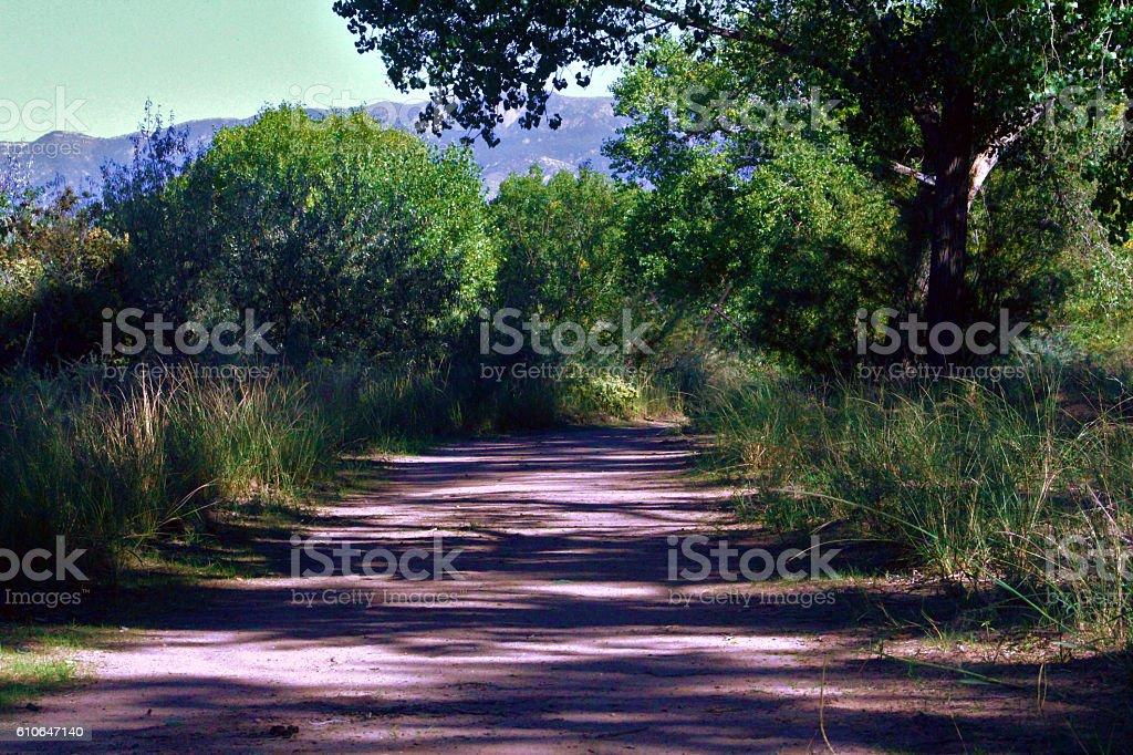 Shadowed Hiking Trail stock photo