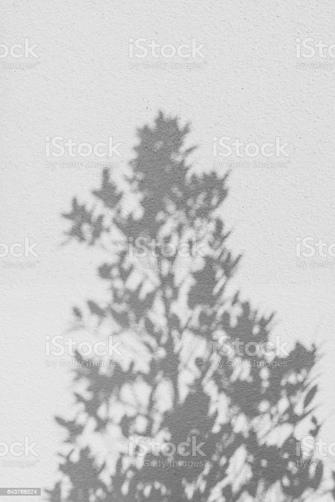 shadows leaf on a gray concrete stock photo