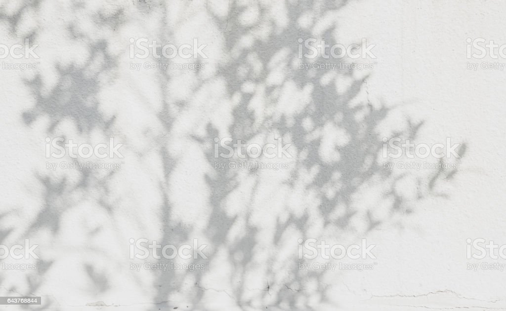 shadows leaf on a white concrete stock photo