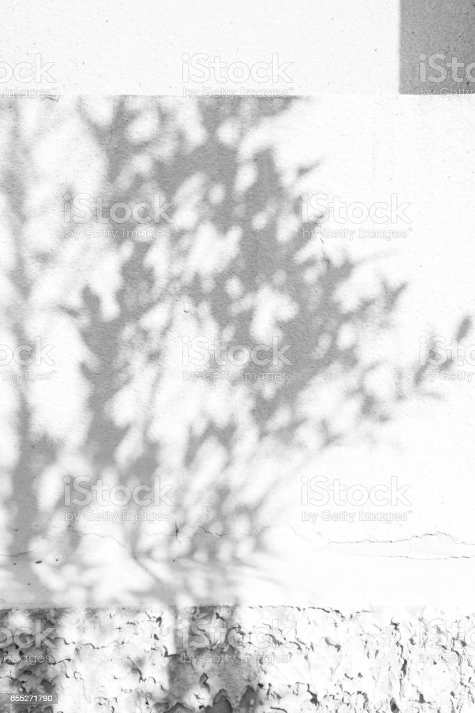 shadows leaf on a white wall. stock photo