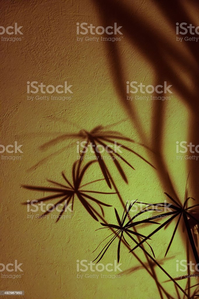 shadows of plants on a white stone wall stock photo