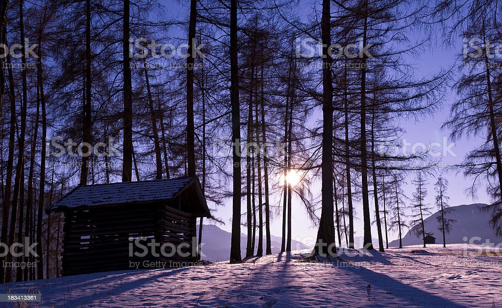 Shadows of the trees in violet winter sun stock photo