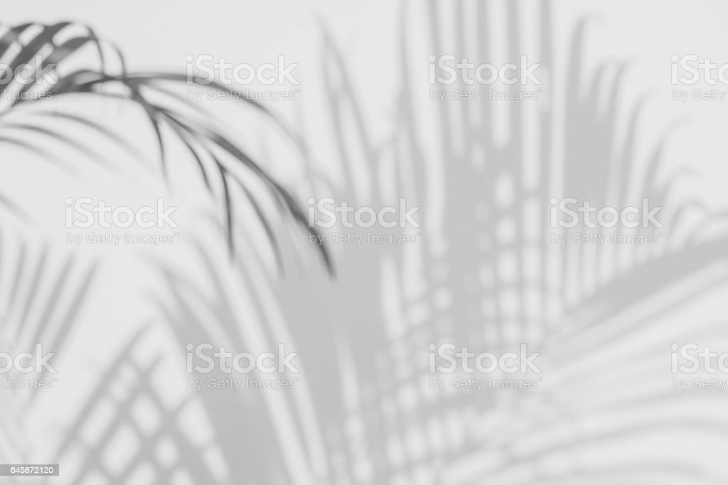 shadows palm leaves on a white wall stock photo