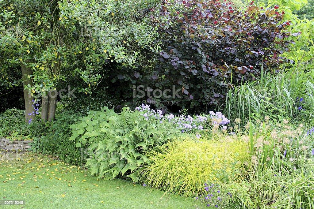 Shady garden border with ferns, grasses, campanula, purple hazel, lawn royalty-free stock photo
