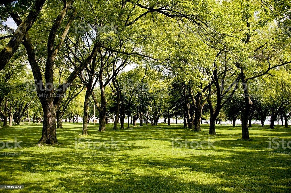 Shady Park royalty-free stock photo