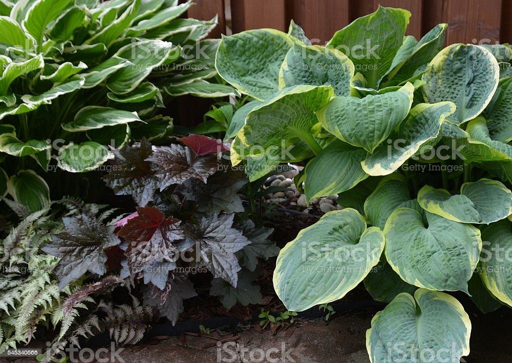 shady perennials stock photo