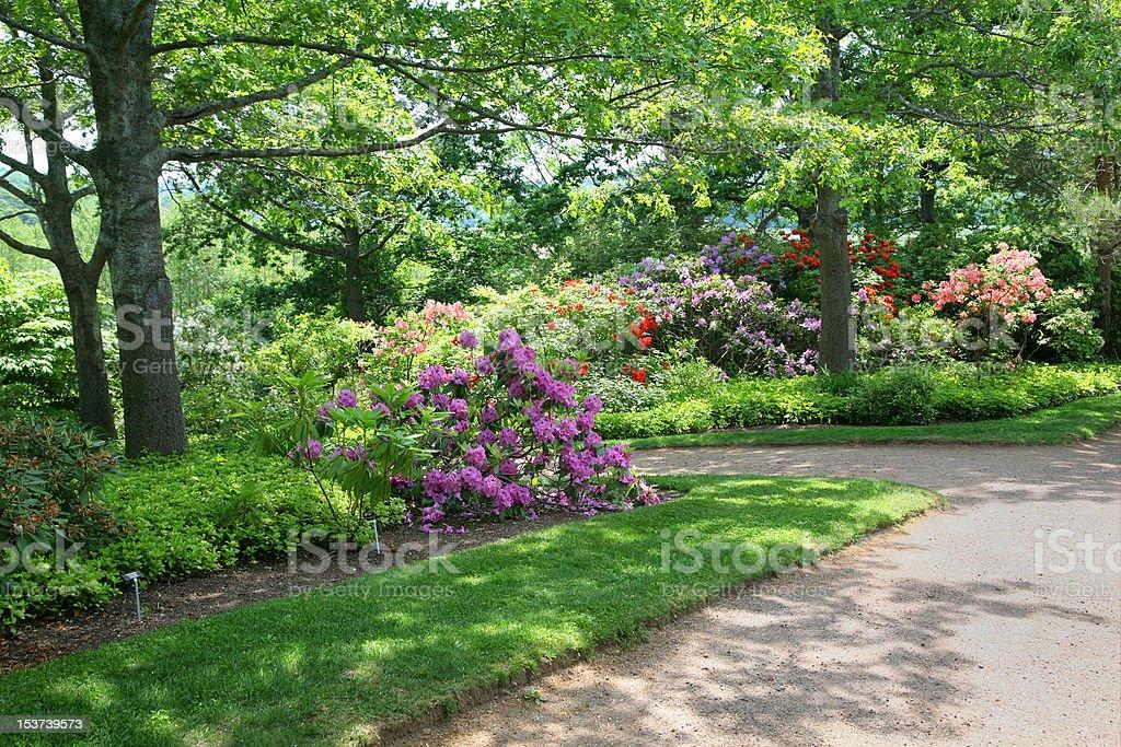 Shady Rhododendron and Azalea Garden stock photo