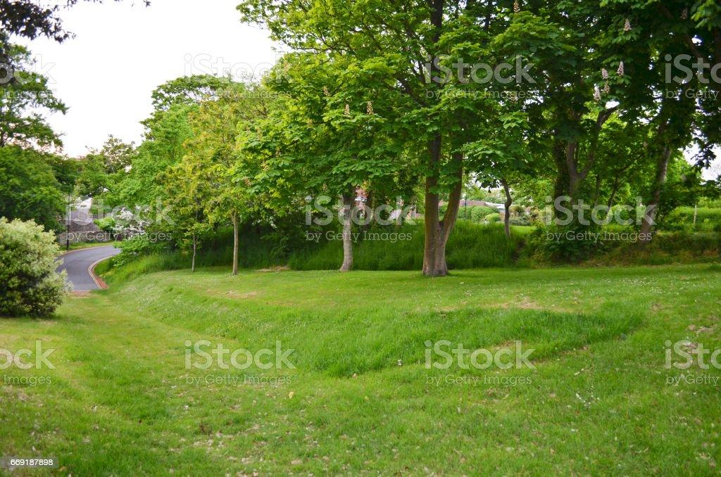Shady Tree and Grass Area stock photo