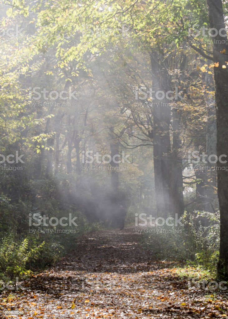 Shafts of Light on Foggy Trail stock photo