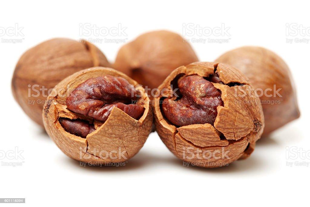 shagbark hickory nuts stock photo