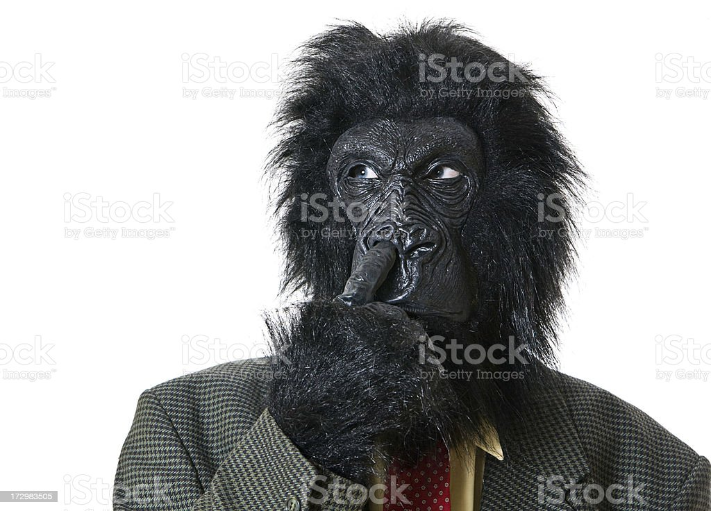 Shaggy Business Gorilla Picking His Nose royalty-free stock photo