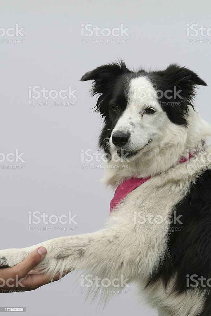 Shake hands. royalty-free stock photo