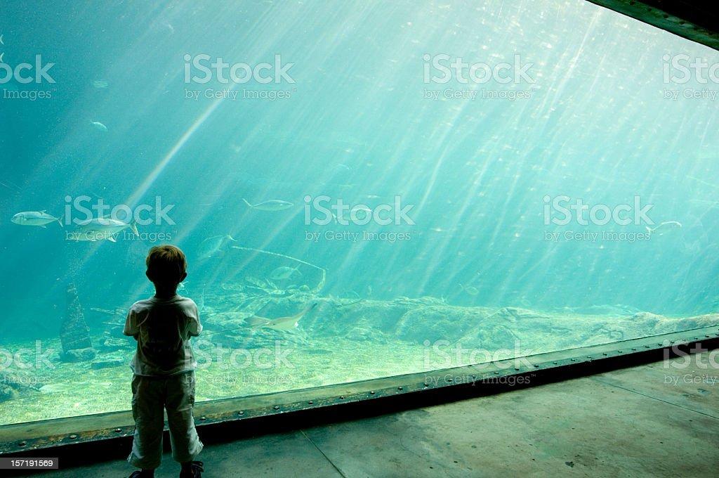 Shaker Aquarium Durban South Africa stock photo