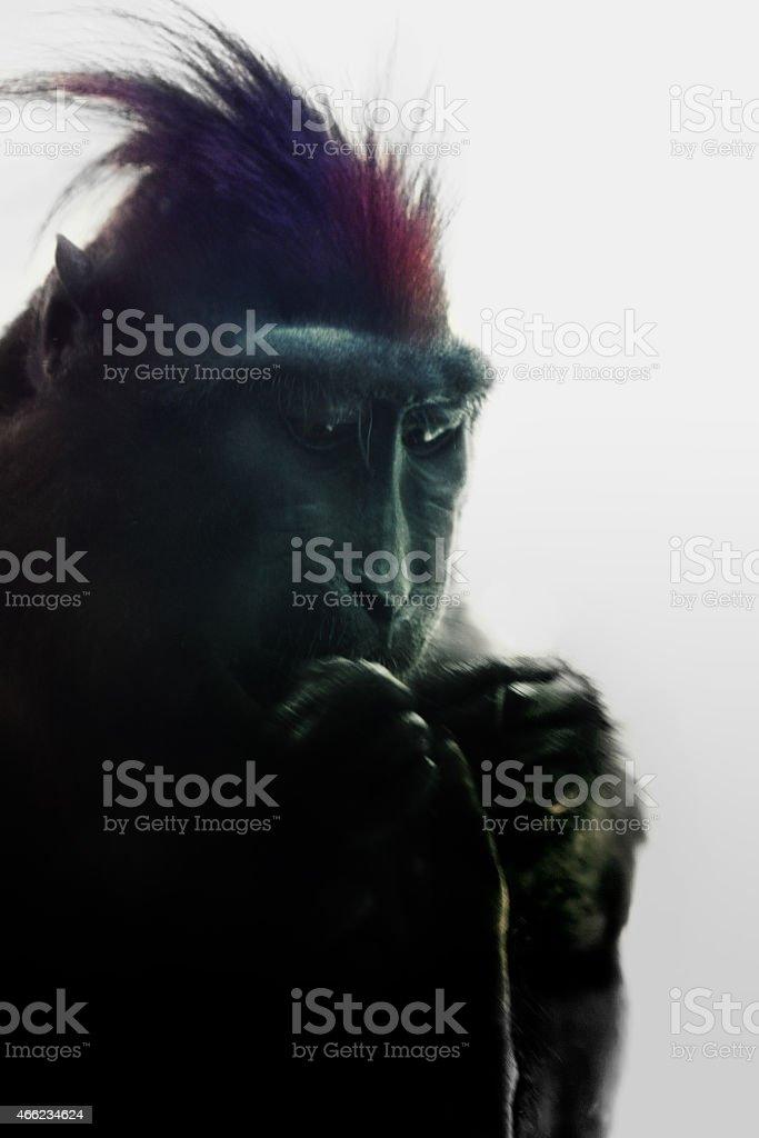 shaking ape's portrait stock photo