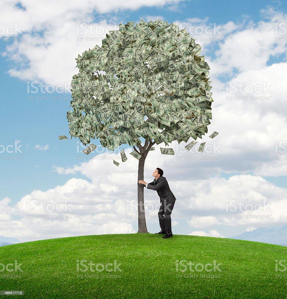 Shaking Money Tree stock photo