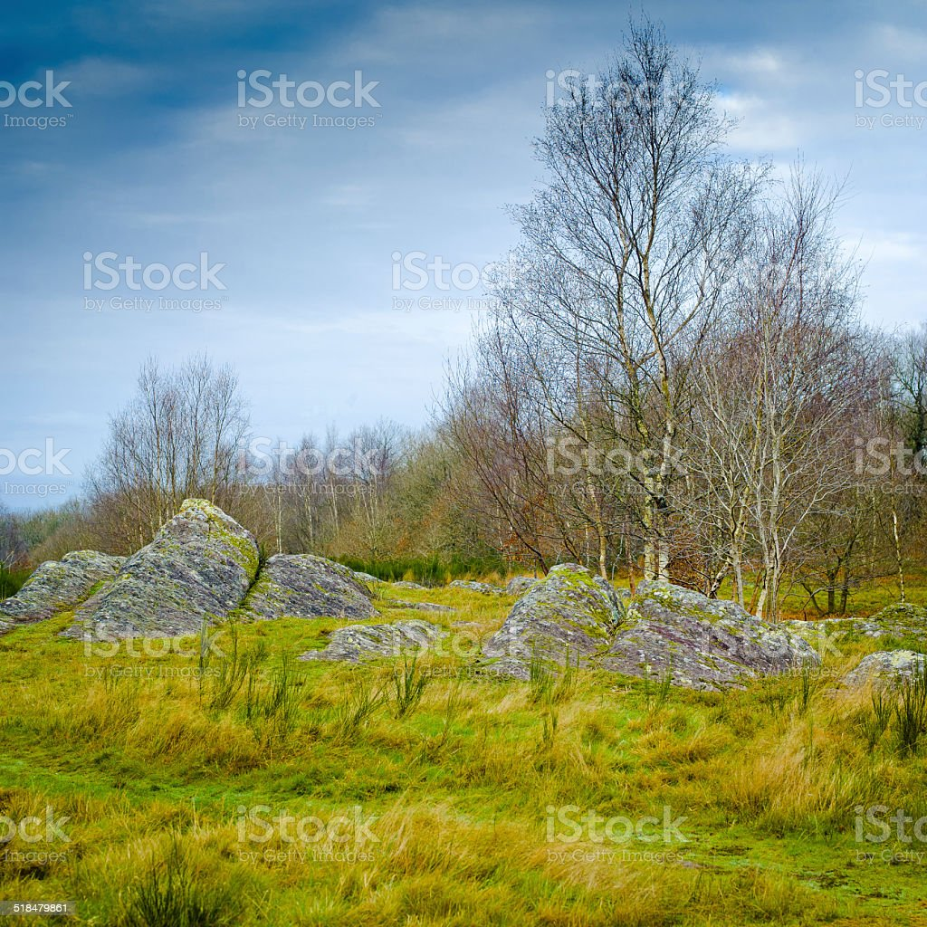 Shale stones - Broceliande Forest stock photo
