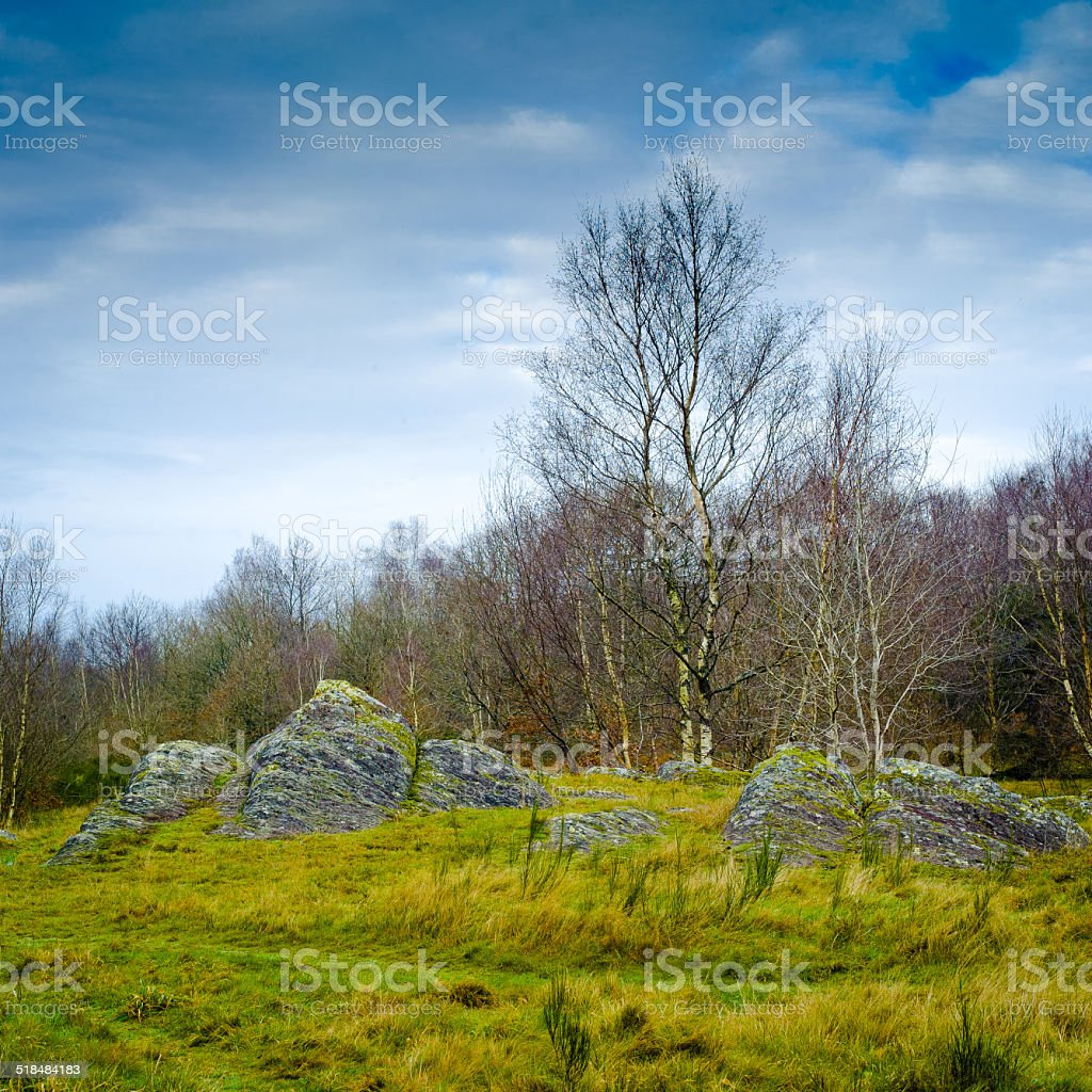 Shale stones in Brittany - Broceliande Forest - France stock photo