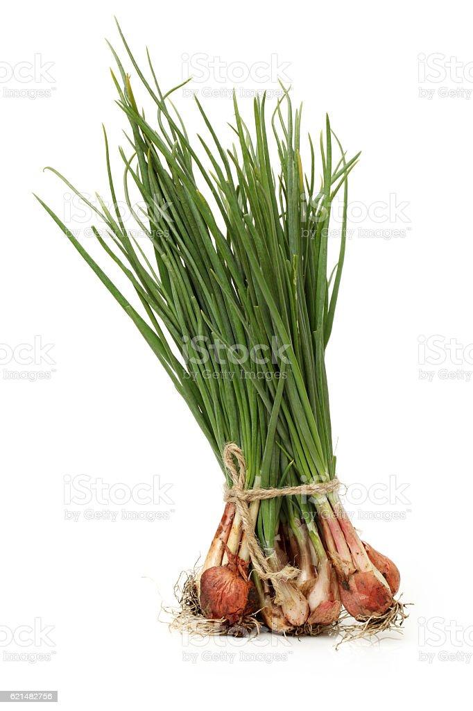 Shallots   (Allium ascalonicum) stock photo