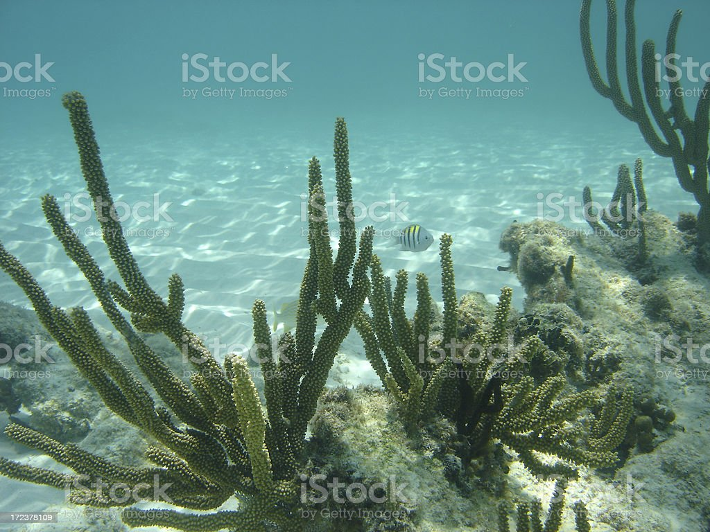 Shallow Coral Reef stock photo