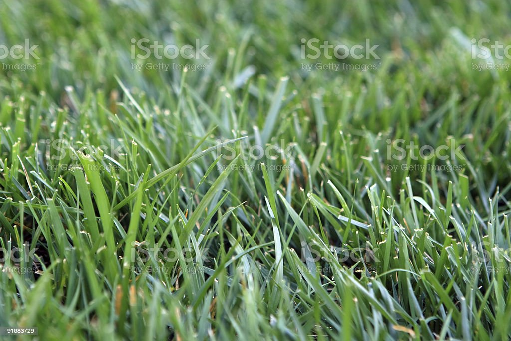 Shallow lawn royalty-free stock photo