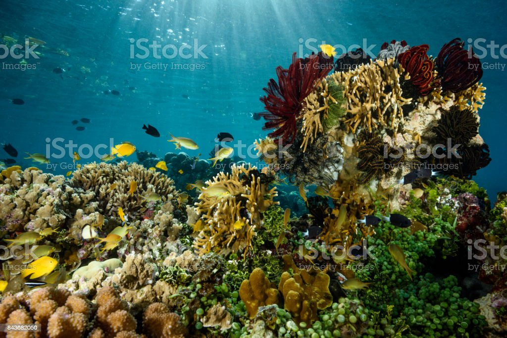 Shallow Reef stock photo