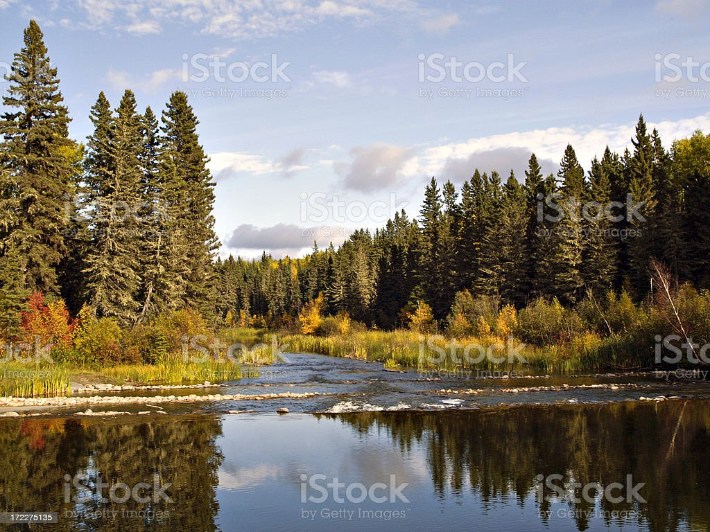 Shallow River in Forest stock photo