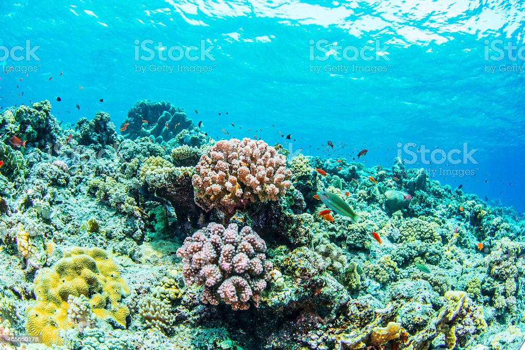 Shallow water stock photo