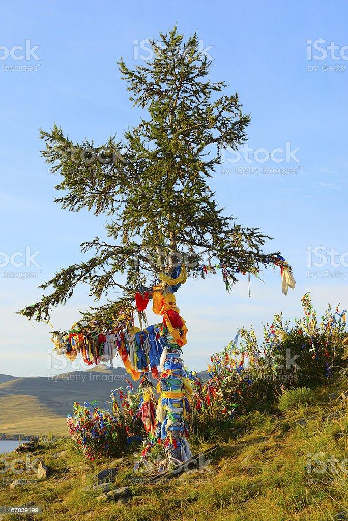 Shamanic tree stock photo