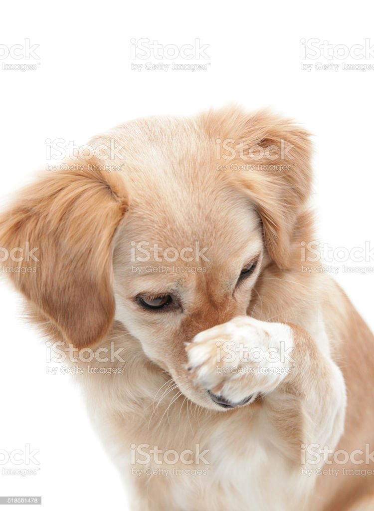 Shame on you, doggie stock photo