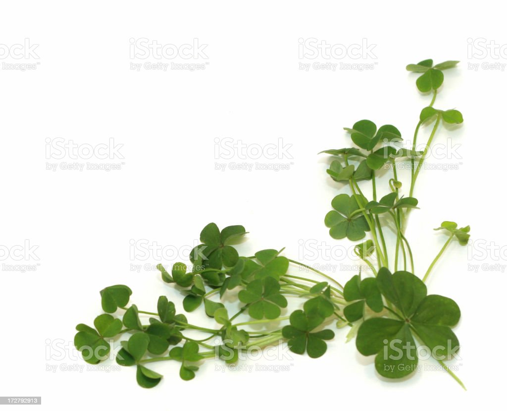 Shamrock Corner royalty-free stock photo
