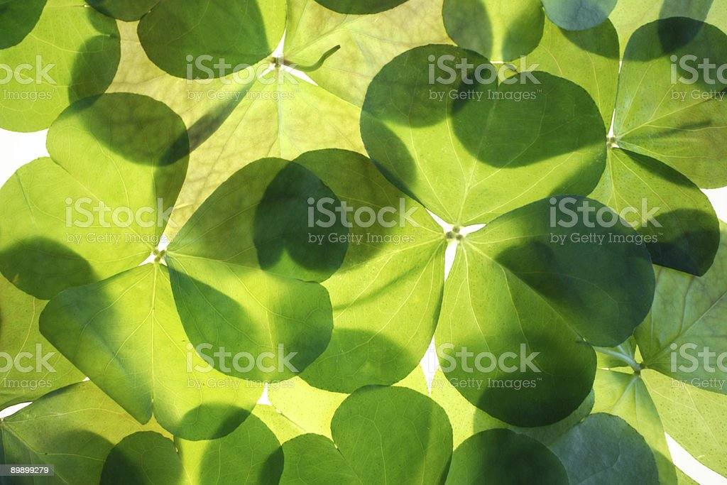 Shamrocks background pattern stock photo