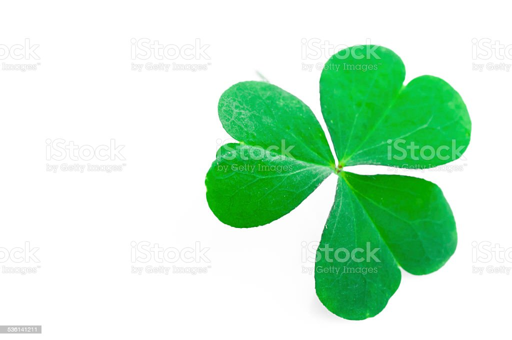 Shamrock,three leaf clover stock photo