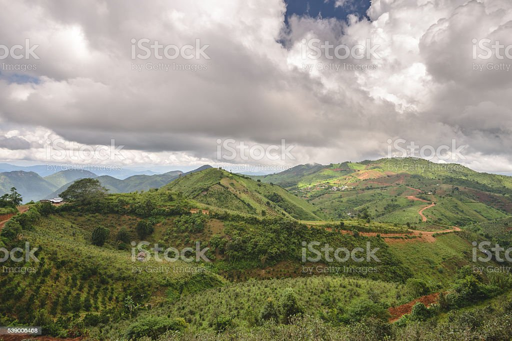 Shan tea hills stock photo