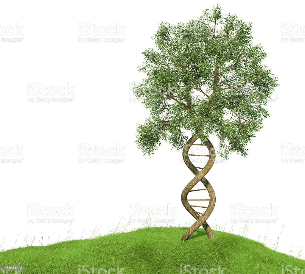 DNA shaped tree with trunks forming the double helix stock photo