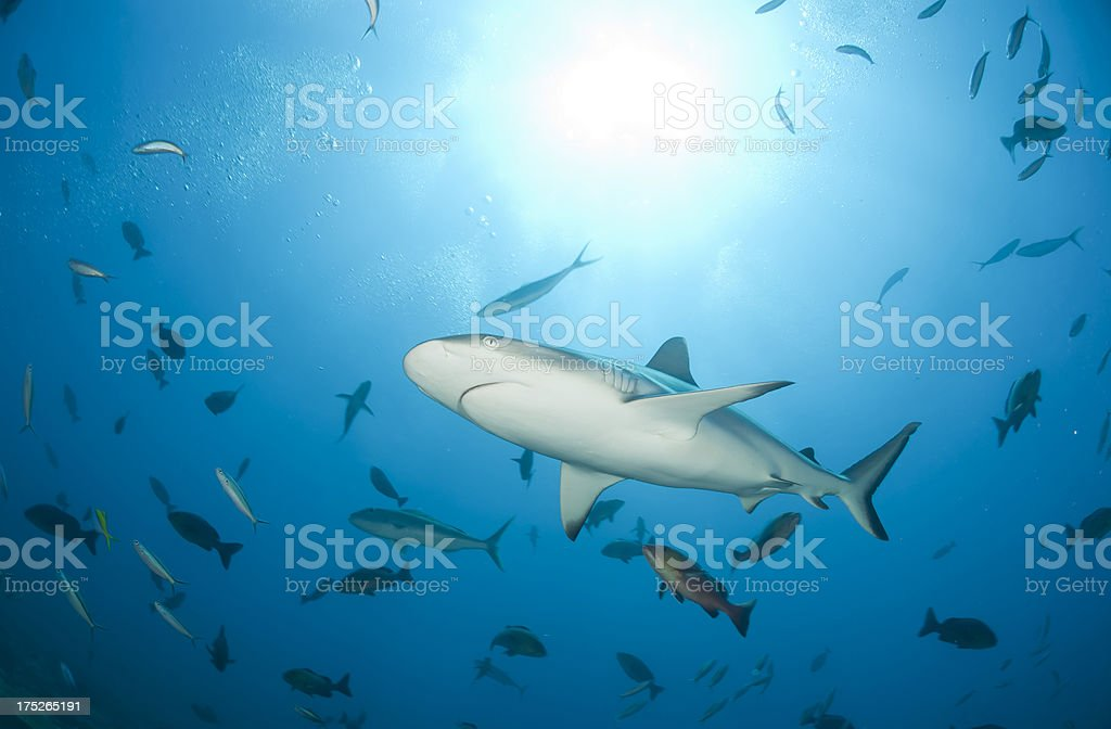 shark and fishes from beneath stock photo