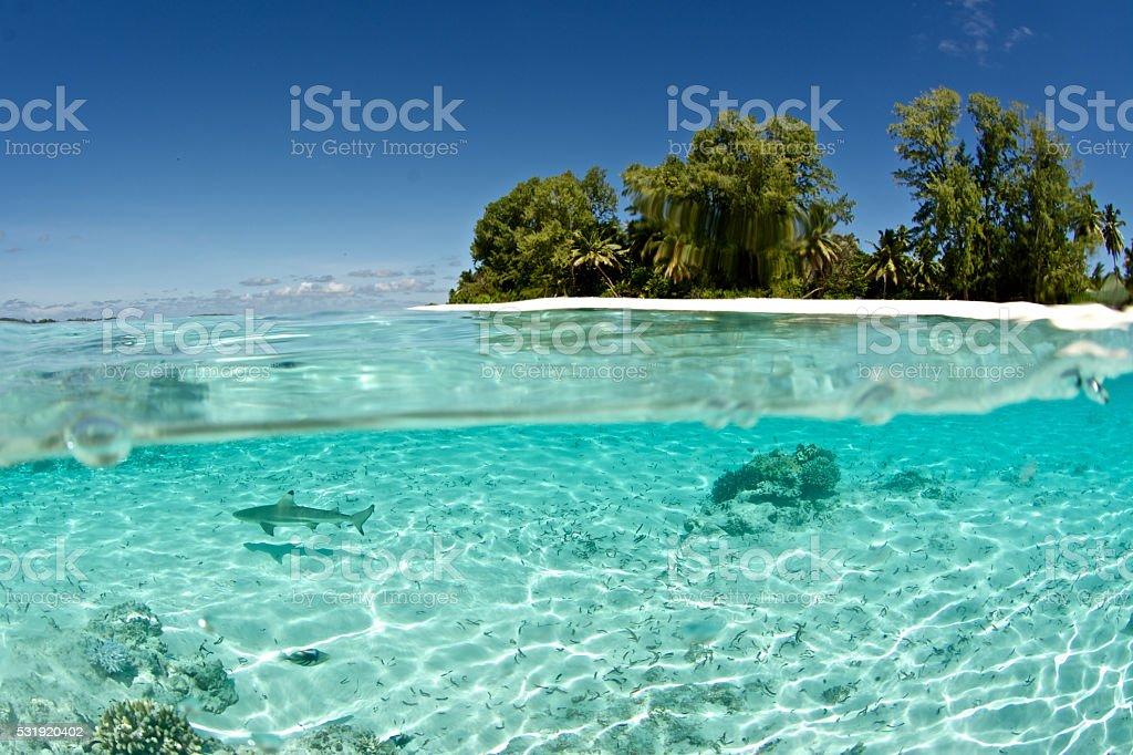 shark and island stock photo