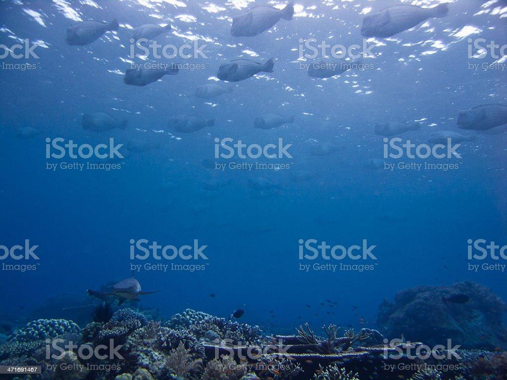 Shark and parrot fish royalty-free stock photo