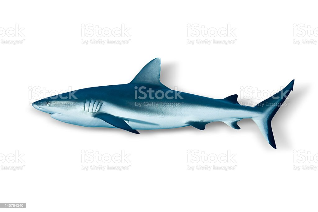 Shark and white background stock photo