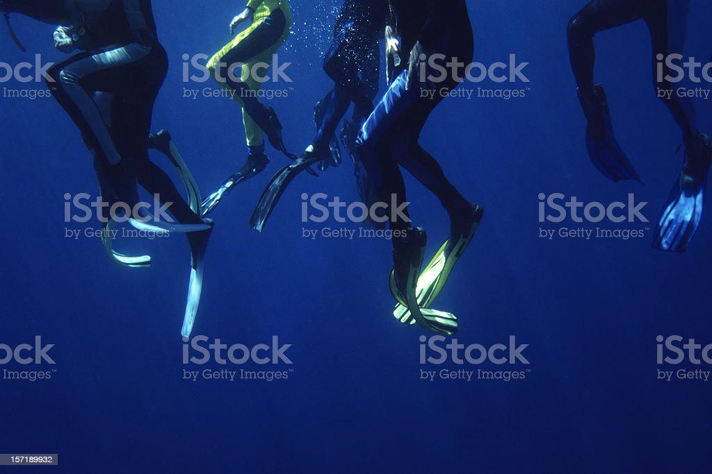 Shark Bait royalty-free stock photo