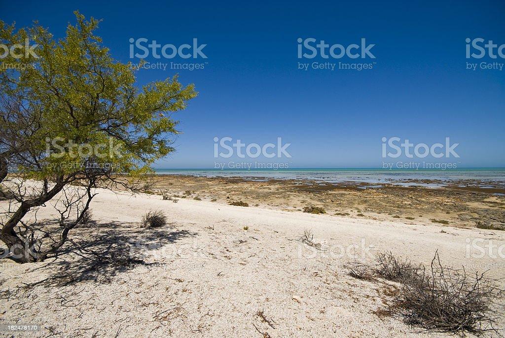 Shark Bay Beach Ningaloo Reef stock photo