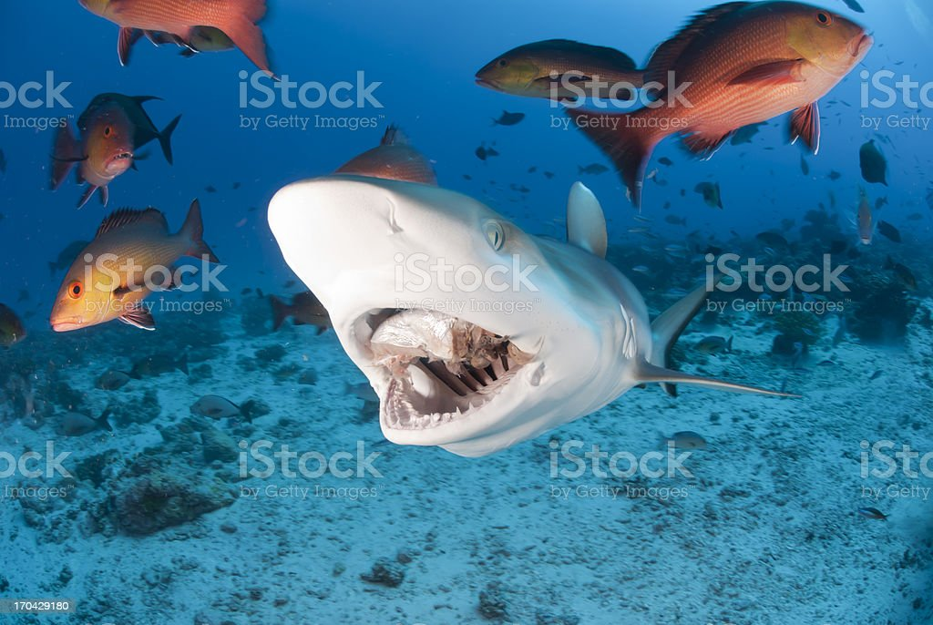 shark bite stock photo
