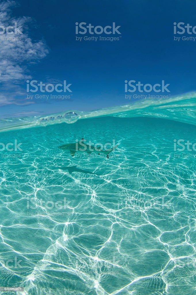 Shark Diving stock photo
