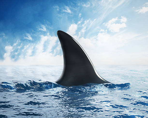 Animal Fin Pictures Images And Stock Photos
