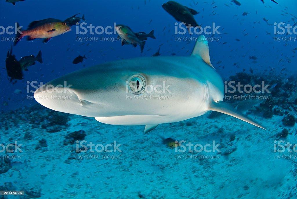 shark eye stock photo